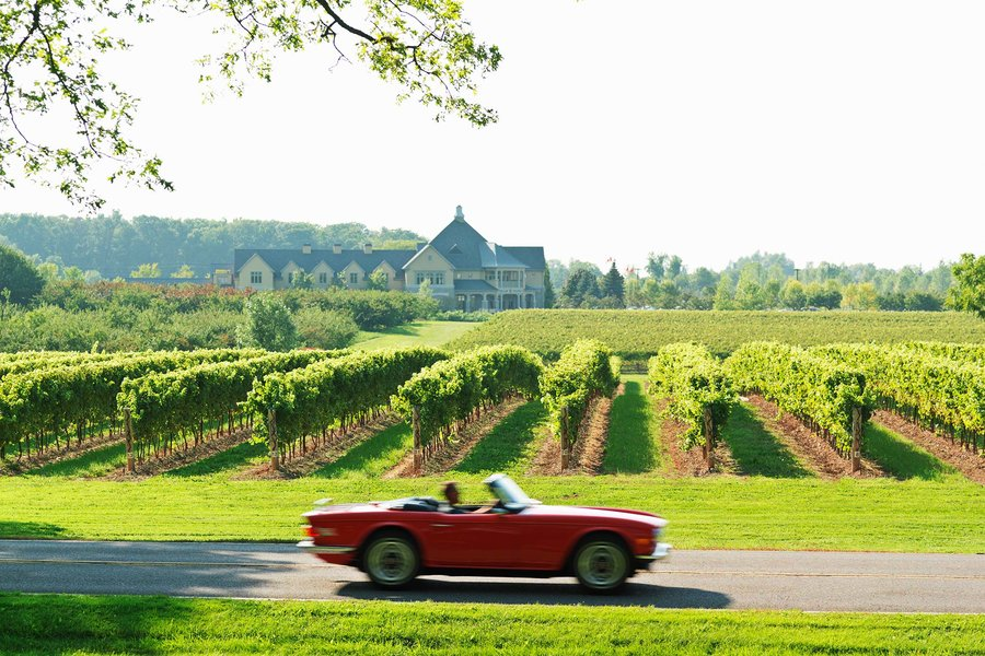 Car passing vineyard in niagara region